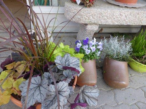 Planter til krukker - Midtsjællands Planteskole