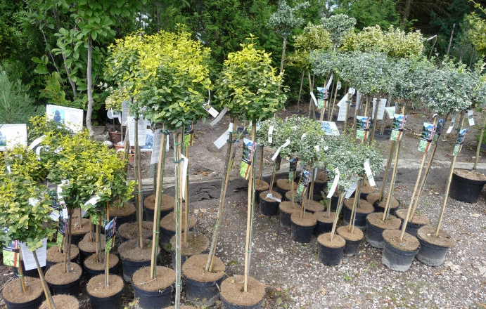 Træer   midtsjællands planteskole