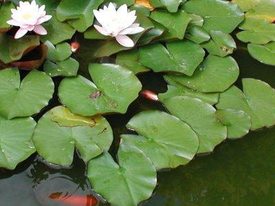 Alger i bassinet