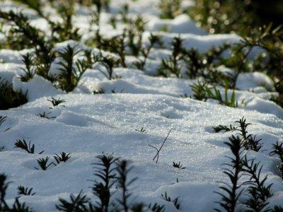 De vintergrønne hitter i haverne