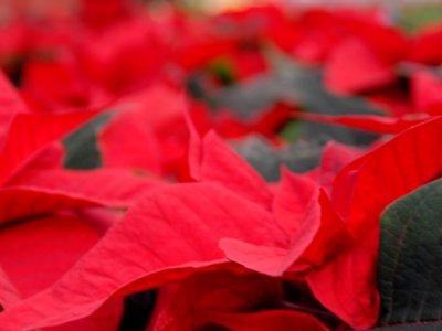 Julestjerner - så er der dømt jul